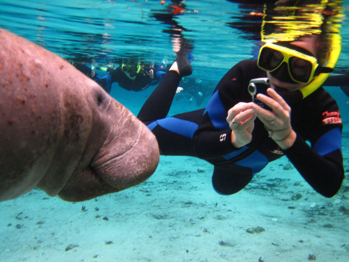 Snokeling with Manatees in Crystal River Florida