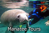 Crystal River Florida Manatee Tour