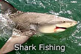 Crystal River Florida Shark Fishing Charter
