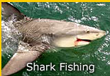 Florida Shark Fishing Charters